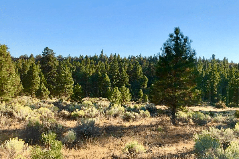 Land availabe in Chiloquin Oregon