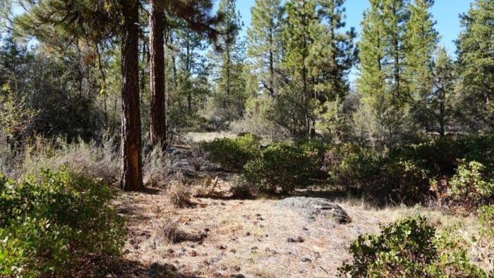 0.22 Acres Raw Land Klamath, Oregon