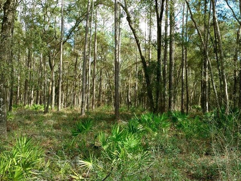 1.37 Acres, Forrest Land for Sale Dade City Florida