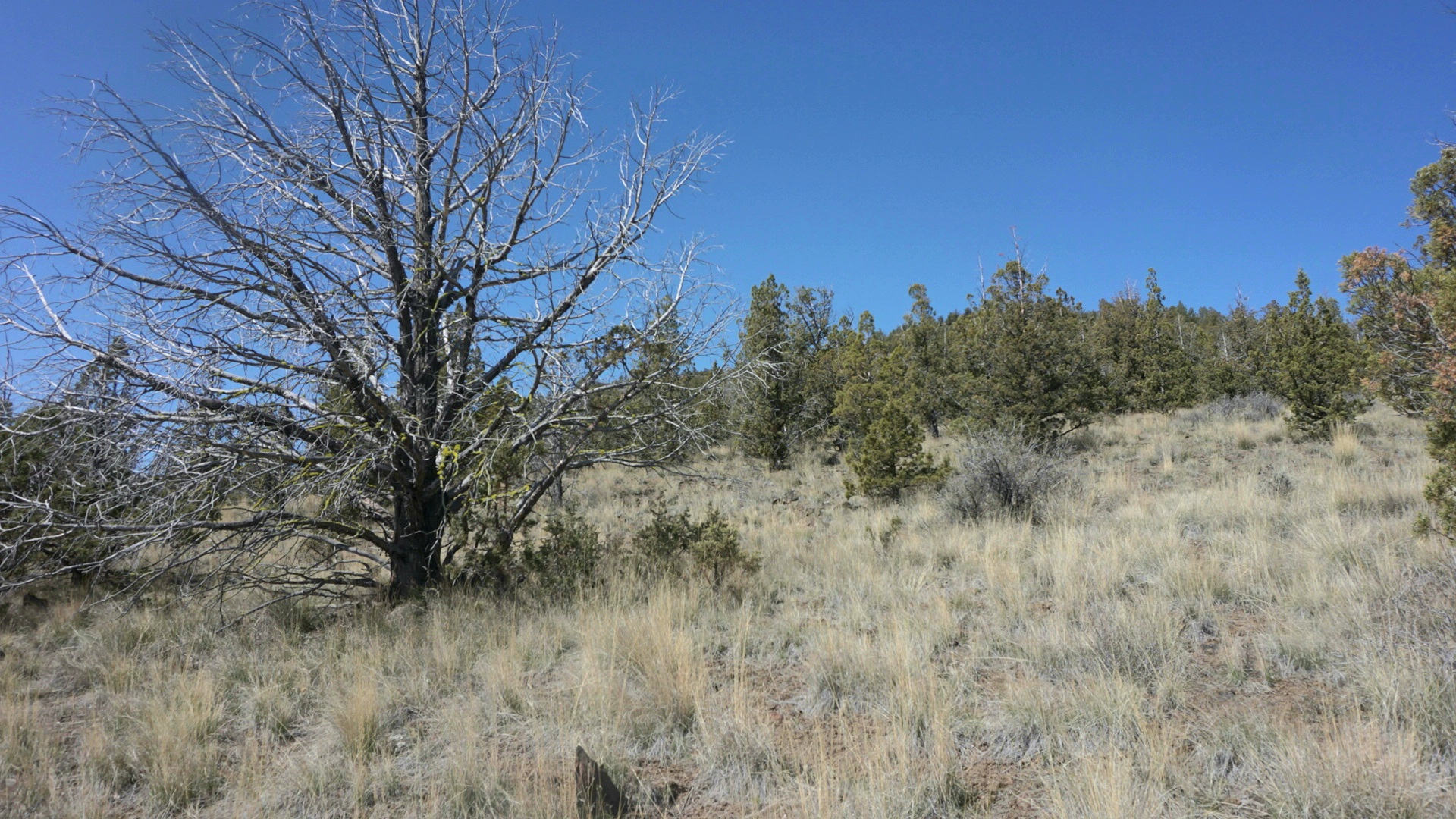 4.15 Acres,,vacant forest Land in Prineville OR