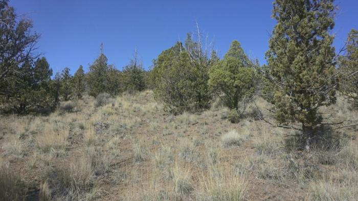 4.15 Acres,, Off-Grid forest Land in Prineville OR